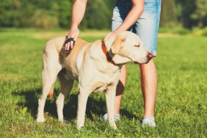 how to manage dog hair